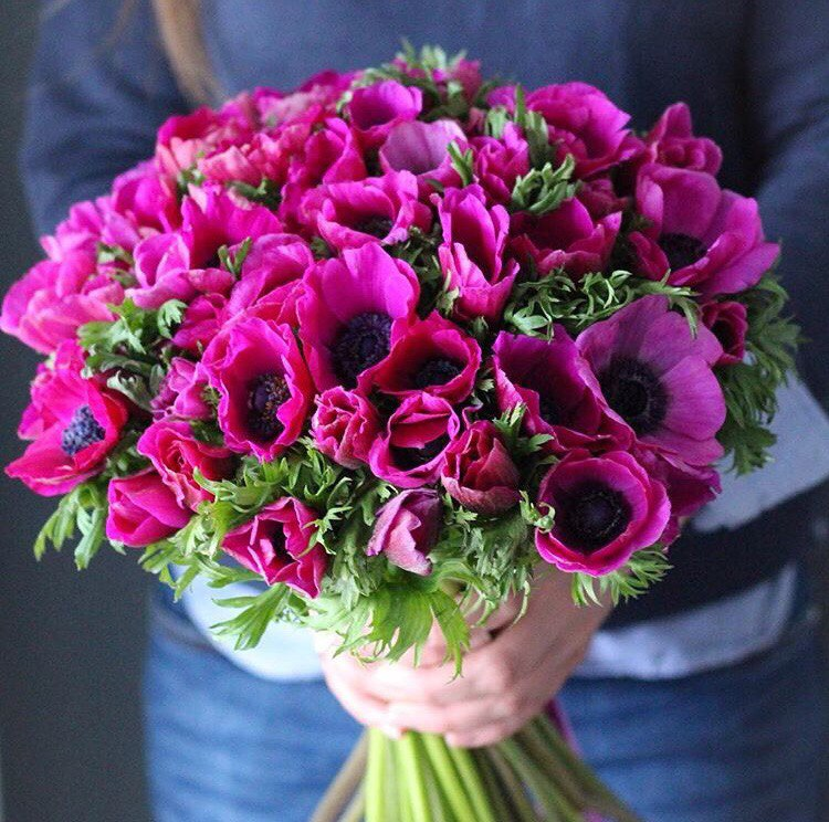 Анемоны букеты цветы фото